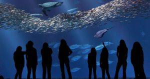Students in the aquarium