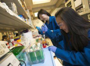 UC Davis Young Scholars Program participants working on an experiment